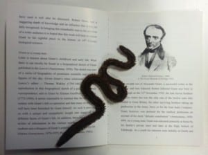 Book Worm - that's Grant and a lugworm