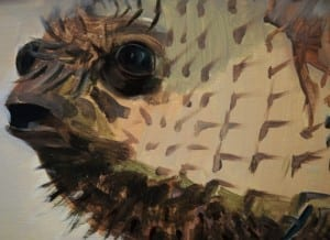 Pufferfish in Viewpoint - Sarah Cameron