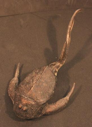 A side-(ish)-on view shoing the relatively unarmoured tail in comparison to the head and body
