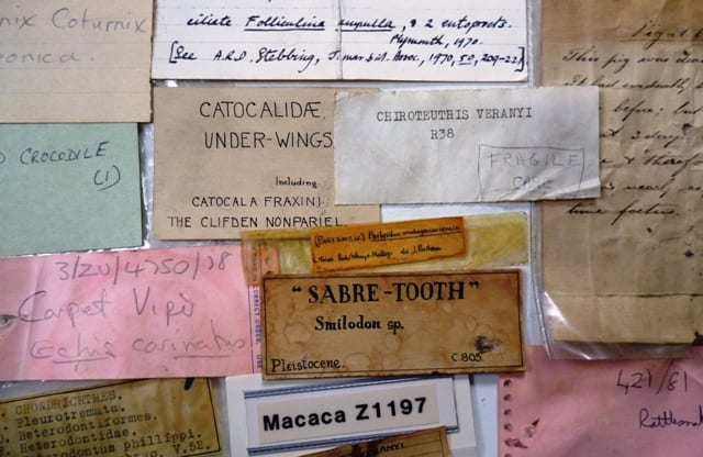 Lost labels from the Grant Museum.