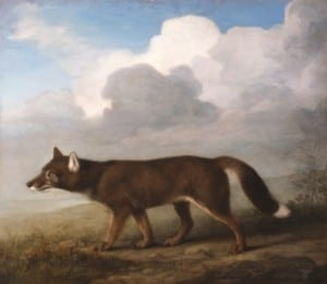 'Portrait of a Large Dog' (Dingo) by George Stubbs, 1772. Private collection courtesy of Nevill Keating Pictures""