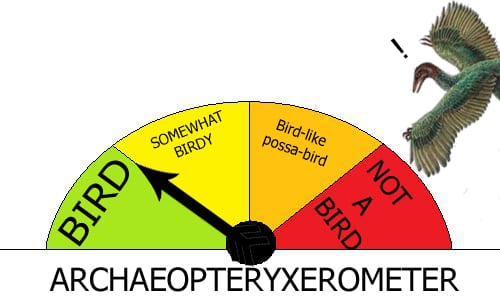 The amazing archaeopteryxerometer