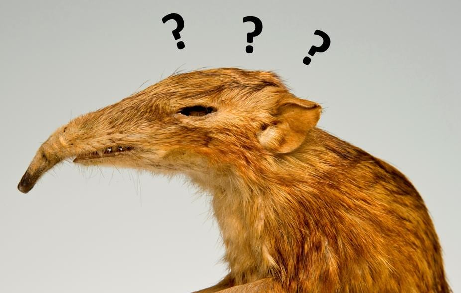 It's enough to confuse an elephant shrew.