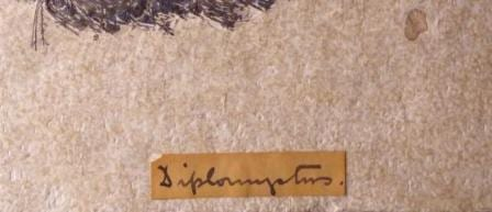 Close up of a poorly written Grant Museum label