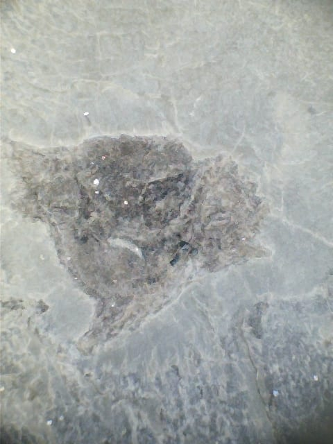LDUCZ-V941 Close up of Rhamphodopsis sp. fossil fish head