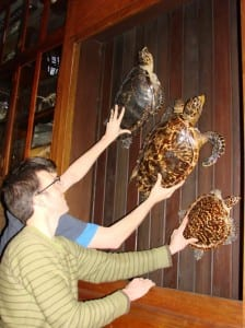 "Installing the turtles in ""flying duck"" formation"
