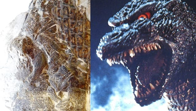 Image comparing LDUCZ-V1508 Dapedium to the scourge of Tokyo, Godzilla