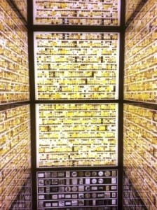 The Micrarium at the Grant Museum inspires curiosity and wonder