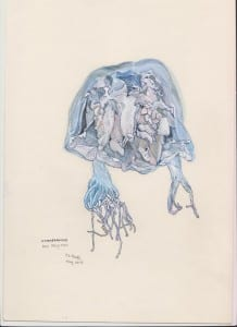 Box jellyfish [Janet Knell, May 2013]