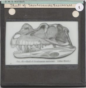 Grant Museum Lantern Slide of a Ceratosaurus skull from the D.M.S Watson collection LDUCZ-8