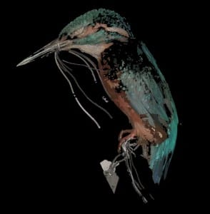 3D Scan of common kingfisher
