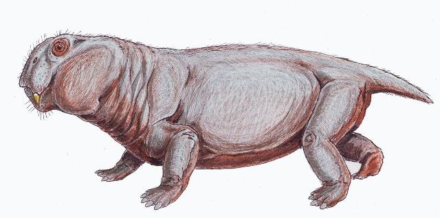 Reconstruction of Lystrosaurus murrayi Image by Dmitry Bogdanov CC BY-SA 3.0 via wikimedia