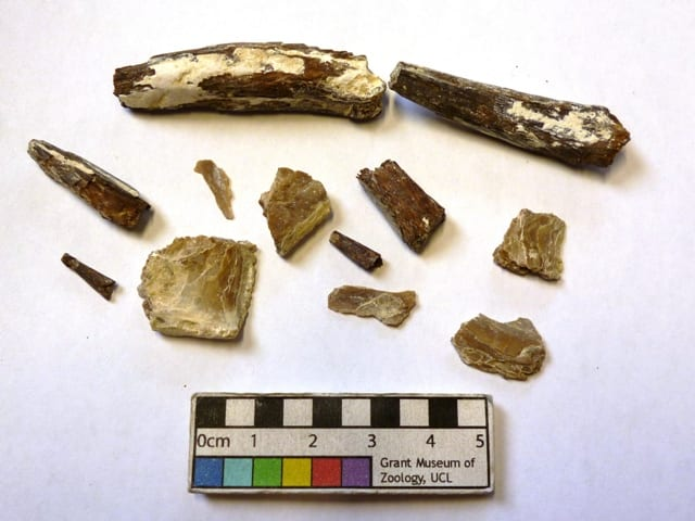 Image of LDUCZ-V1157 Fossil fish fragments from the Grant Museum of Zoology UCL