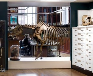 The rhino in the Grant Museum - what's his name?