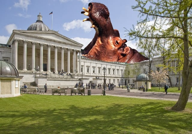 Hippo at large at UCL