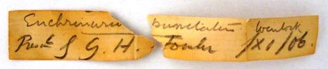Label for LDUCZ-J7 which reads Enchrinurus [sic] punctatus Wenlock presnd by G.H.Fowler /XI/06.