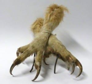 LDUCZ-Y1603 Bubo bubo Eurasian eagle owl feet