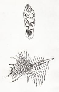 Drawing by participant at a recent Drawing Life workshop