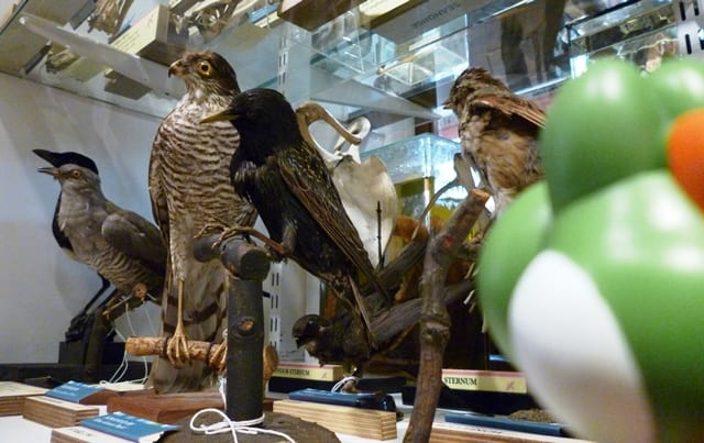 Image of Yoshi looking at birds at the Grant Museum UCL