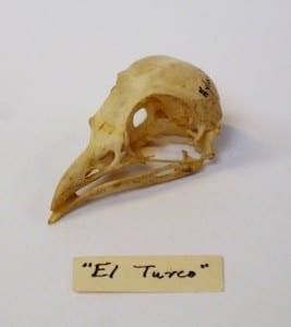 LDUCZ Y411' El Turko'
