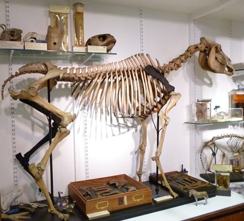 The quagga's missing fourth leg has been replicated through 3D printing.