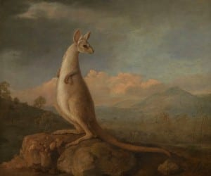 'The Kongouro from New Holland (Kangaroo)' by George Stubbs (1772) (c) National Maritime Museum, Greenwich