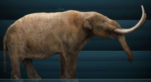 "Graphic reconstruction of a mastodon ""Mammut americanum Sergiodlarosa"" by Sergiodlarosa. Licensed under CC BY-SA 3.0 via Wikimedia Commons - https://commons.wikimedia.org"""