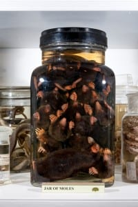 LDUCZ- Z2754 Jar of Moles (C) Matt Clayton 1011 001