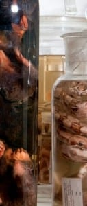 Look closely between in the space between the jars of moles and snakes
