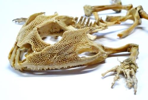 LDUCZ-W201 skull and limb detail