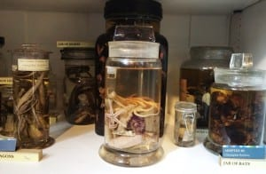 Overlooked Specimen of the Week 199 at front of Cabinet 12