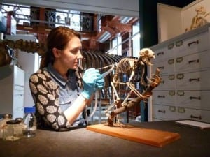 UCL Museums and Collections conservator Emilia Kingham with aye-aye skeleton