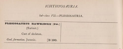 Pleisiosaur cast X227 originally listed in 1890 Grant Museum catalogue