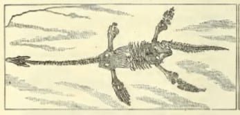 Plesiosaur from Ward's Catalogue