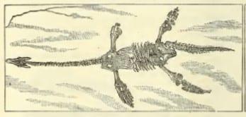 Plesiosaur from Ward's Catalogue