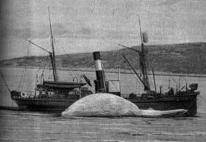 Whaling ship circa 1900