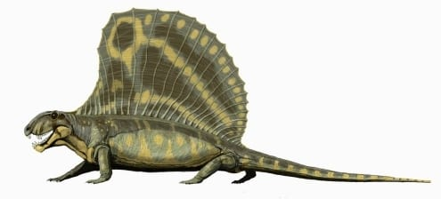 Dimetrodon giganhomogenes, autor - Bogdanov,2006 CC BY-SA 3.0