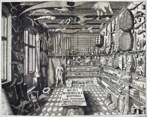 The Wormarium Museum (1655) - the archetypal Cabinet of Curiosity (public domain)