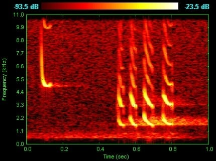 Image of a Bat Spectrogram