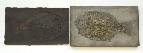 Mould and fossil original Dapedium pholidotum