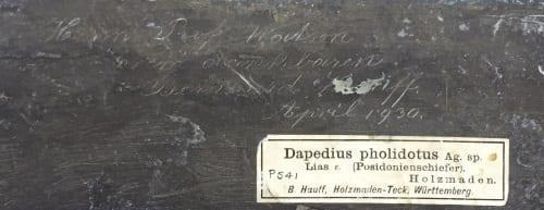 Inscription on reverse of LDUCZ-V610a