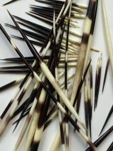 LDUCZ-Z2237 Porcupine quills