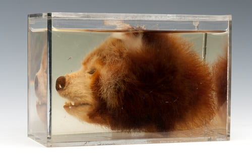LDUCZ-Z2273 bisected red panda head