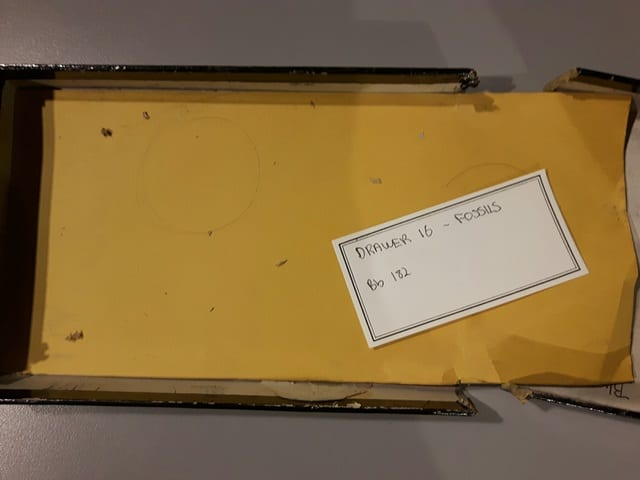 Image of the box for fossil specimen LDUCZ-NON2183 from the Grant Museum of Zoology