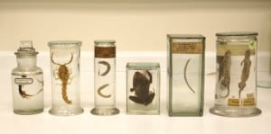 Fluid preserved specimens newly conserved