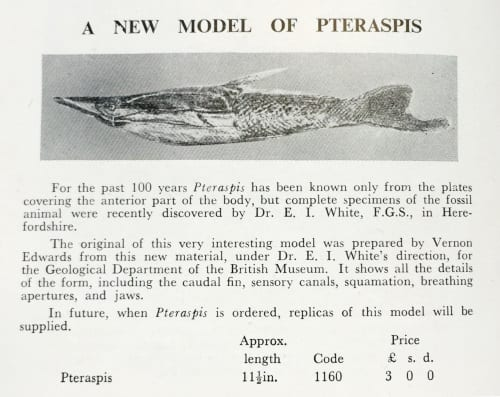Description of Pteraspis model in 'A Catalogue of Plaster Cast Models of Extinct Animals' Gregory, Bottley & Co. Baysford Press Ltd. 1957