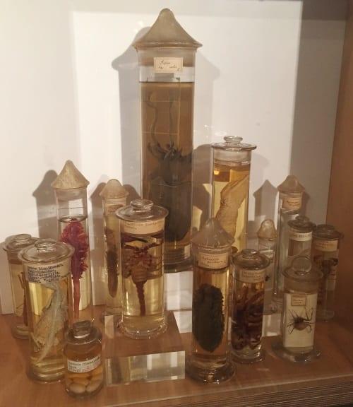 Frič fluid specimens in the Derby Museum