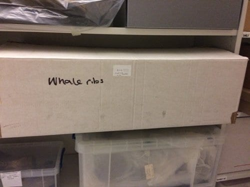 Can you guess what whale bits are in this box?