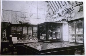 The last time the whale was publicly exhibited was in Woodspring Museum, Weston Super-Mare, prior to 1948.