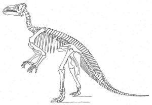 Othniel Marsh's Iguanodon reconstruction, 1896